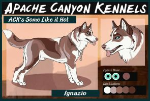 ACK's Some Like it Hot: Ignazio by Sedillo-Kennels