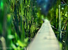 into the green... by maiko-chan