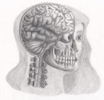 The Cranial Cavity and Its Contents by LockedBox