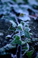 freeze by CatchMePictures