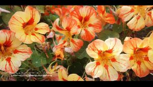 Flowers by RazielMB-PhotoArt