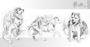 Winged wolves by akreon