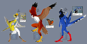 [RE-Auction] - Natural Harpy Adopts ENDED by Linkaton