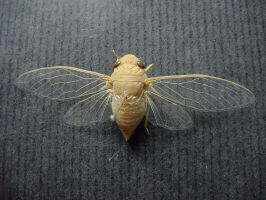 Molded Insects sixteen by EllenStock