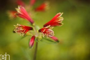 Red Flowers by HartBiit