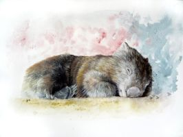 Wombat Commission by Sejafin