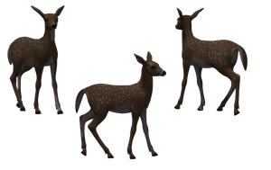 Deer - Fawn 09 by Free-Stock-By-Wayne