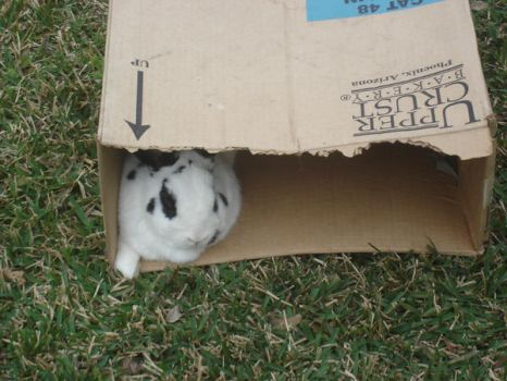 Bunny in a box 1 by waterfish5678901