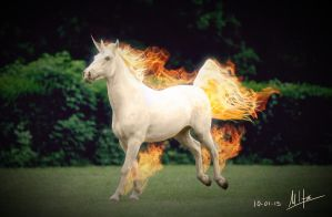 Real life Rapidash by Miltoonss