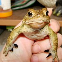 American Toad 222010 by seto2112