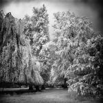 Snow Trees infrared by MichiLauke