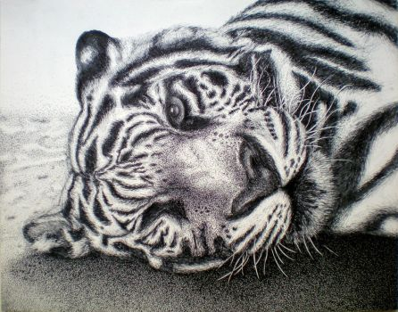 White Bengal, in pen and ink by 0hMy