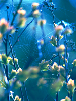 114. SPIDERWEB by ichi-ju