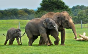 Elephants 3 by tpphotography