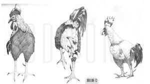Rough#Chicken by odilon2012