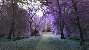 Purple forest by Vanussi