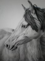 Horse Portrait by Kaly89