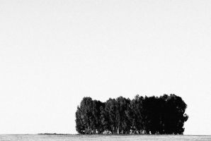 Trees by JACAC
