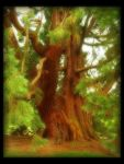 Giant Tree by Forestina-Fotos