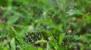 Spider in the rain by perrr03