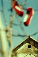 birdhouse by unda