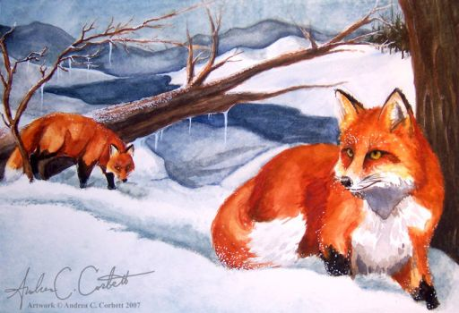 Winter Foxes by Andagora