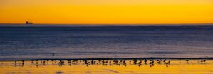 Sunrise at Puerto Madryn I by charlomer