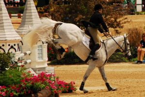 Rolex 08 Show Jumping8 by zeeplease