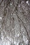 Snowy Branches by PakistaniHurricane