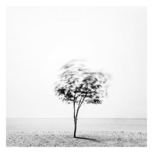 Tree In The Wind by MahmoudYakut