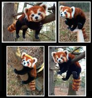 Red Panda Poseable Doll by Blazesnbreezes