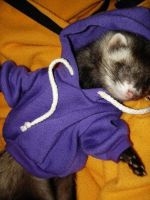 ferret in a hoodie by ismellaschaffner