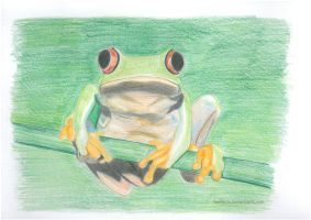 tree  frog by HerrLinde