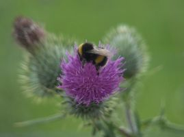 bee!!! 4 by hazellucy