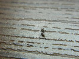 Macro Fly by ThroughTheEyePiece