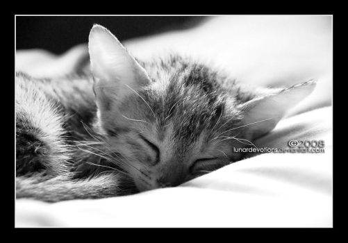 cat nap IV by lunardevotions