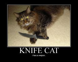 Motivational Poster- Knife Cat by MidoriEyes