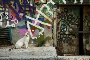 Graffiti Cat by Sublevel3