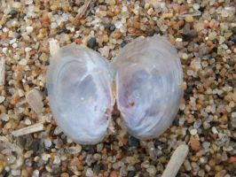 The Shell Of A Heart by lilburi4ever