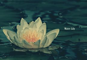 Water Lily by K-RiM-Startimes2
