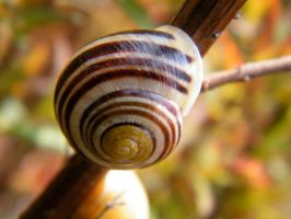 Snail by Variety-Stock