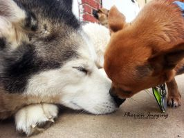 Puppy Love by PhorionImaging