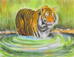Tiger in water by DaTa84