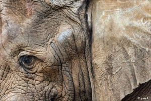 abstract elephant by Yair-Leibovich