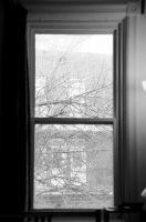Out my window by mightystag