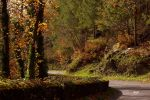 Tortuous roads by amiejo