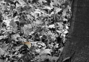 Mouse in leaves by Artelanas