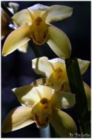 Even More OrchidsFor Moms by shutterbugmom