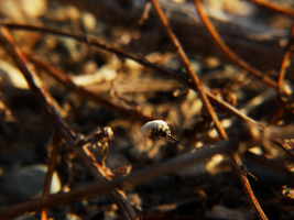 Bombyliidae by IoannisCleary
