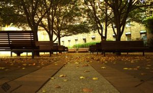 lonely autumn by iraqiguy